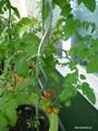 jardin_balcon