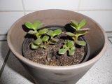 plante_grasse